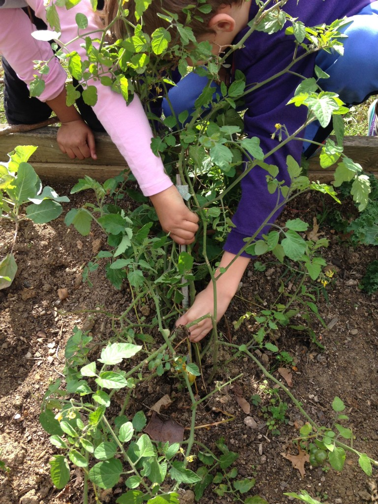 Working in the Outdoor Classroom