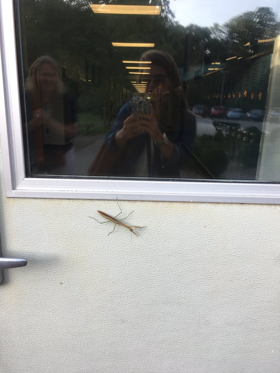 is-it-a-lucky-sign-welcoming-back-kids-and-praying-mantises-today-thinkcampbell-campbellaps-https-t-co-ufightdpg8