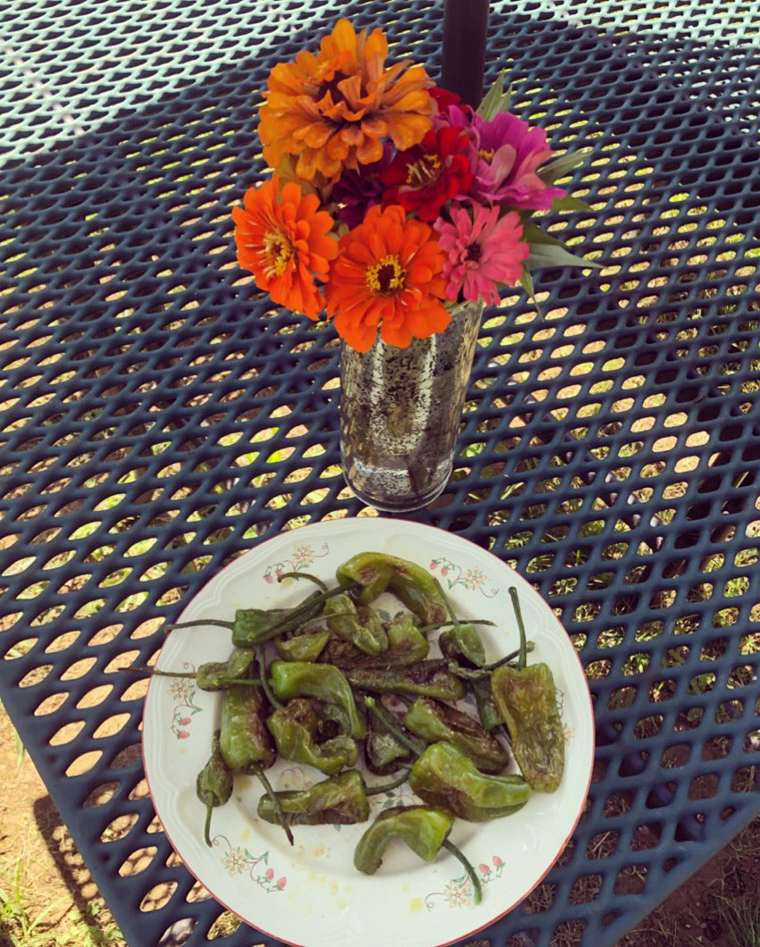 zinnias-and-padronpeppers-from-our-schoolgarden-campbellaps-this-is-how-welcome-new-staff-eleducation-https-t-co-bizc3lp90y