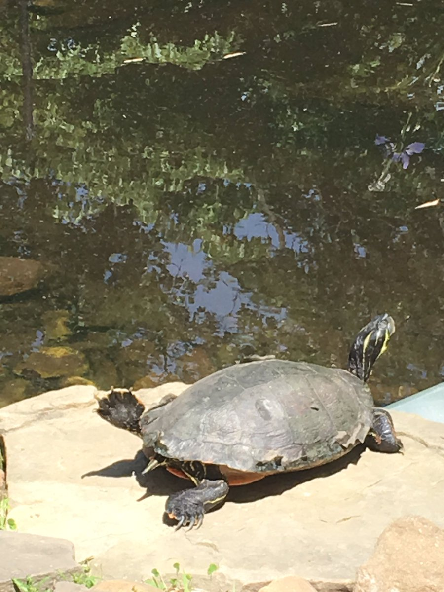 post-sol-mindfulness-break-in-the-courtyard-with-msrosetweets-s-class-even-the-turtle-is-doing-yoga-https-t-co-2lfnsd0ku3