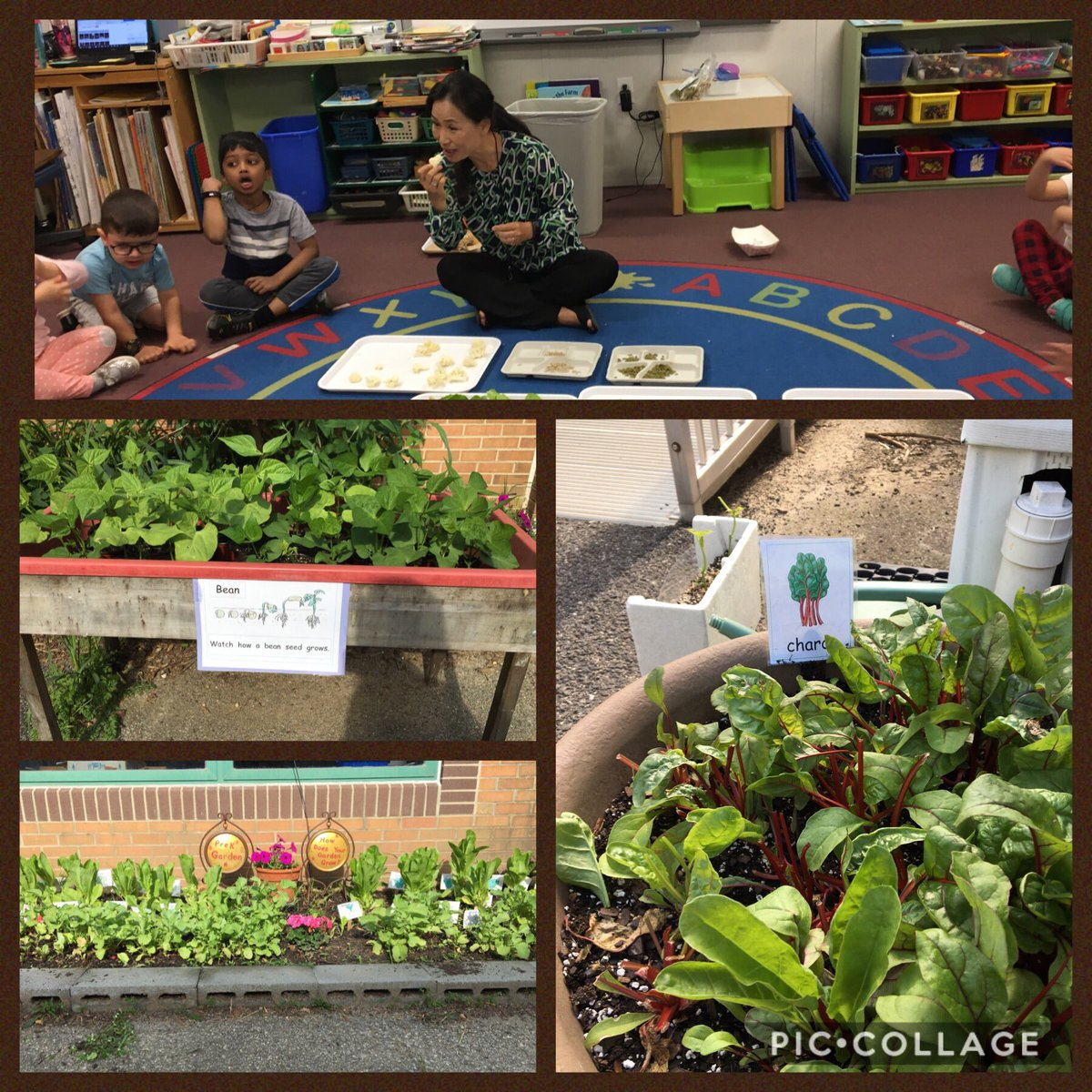 ms-kim-harvested-vegetables-and-shared-them-with-her-campbell-students-campbellaps-https-t-co-s1lpvztduj