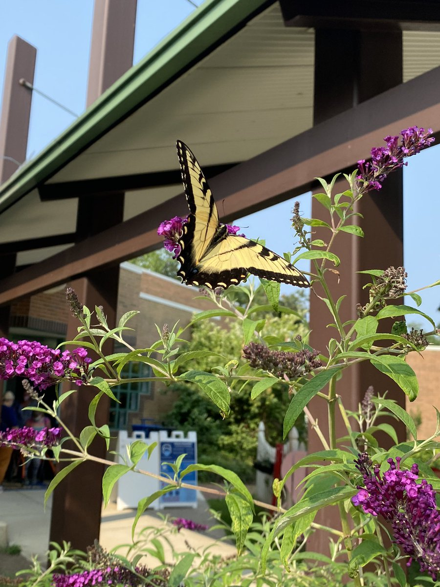 checking-in-from-summer-school-we-went-exploring-for-pollinators-and-we-found-some-campbellaps-https-t-co-uccm6rwrsh