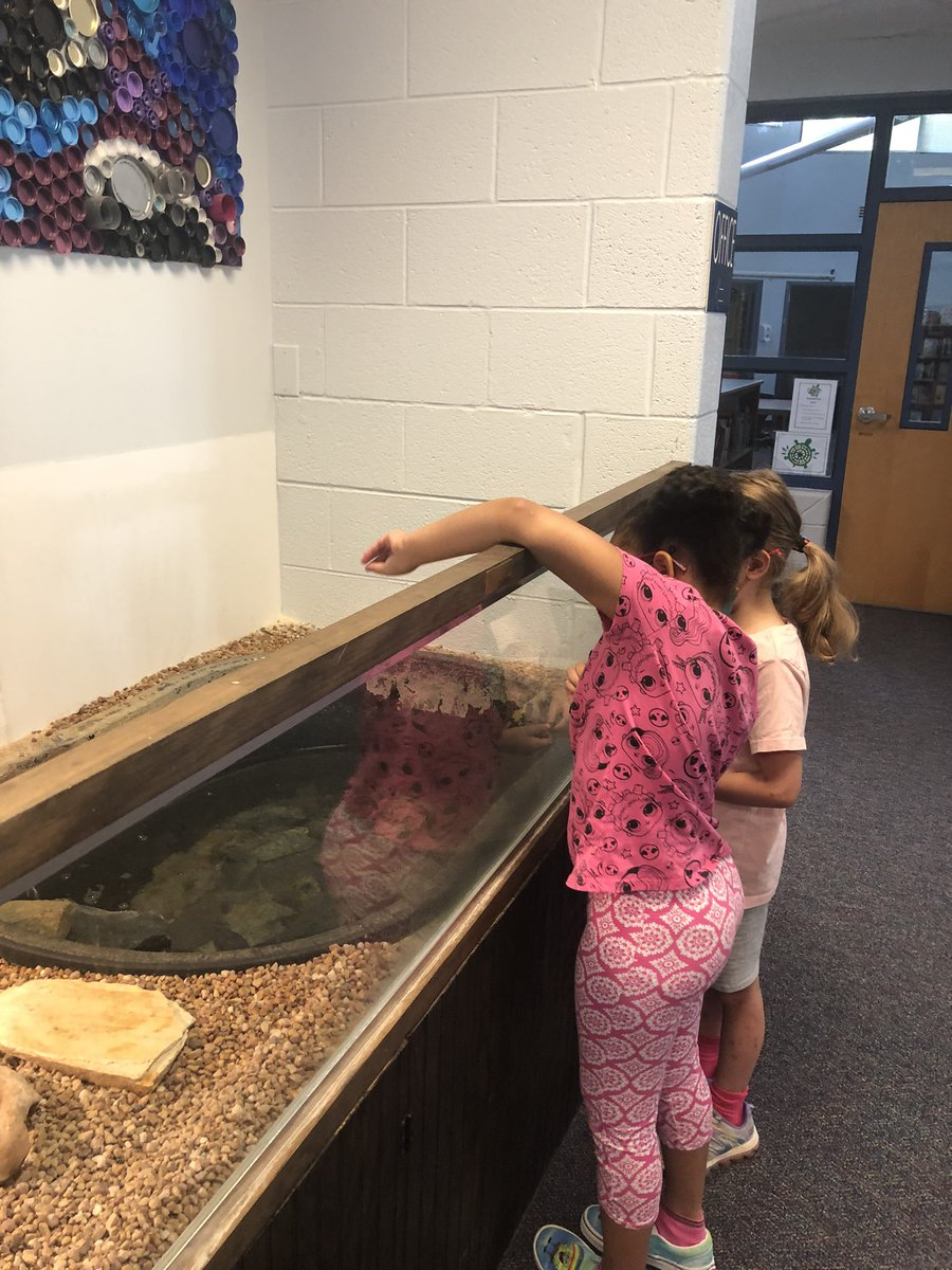 any-good-math-teaching-point-leads-to-feeding-turtles-fair-shares-of-course-apsmath-https-t-co-to7adkskre